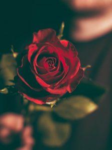 valentinsgruesse-rote-rosen